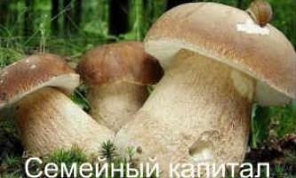 Як готувати білі гриби