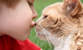 Як лікувати домашніх тварин від позбавляючи?