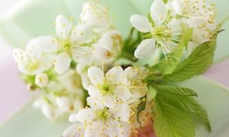 Якими властивостями володіють квітки жасмину?
