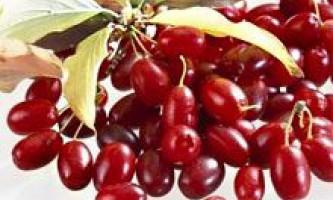 Кизил: склад, властивості і лікування кизилом. Ягоди і листя кизилу. Кизил в кулінарії