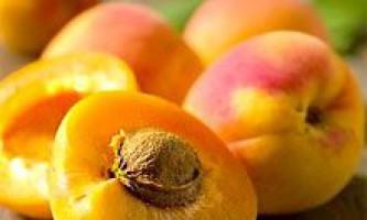 Масло абрикосових кісточок: склад, властивості і застосування. Масло абрикосових кісточок в косметології для обличчя, волосся і нігтів
