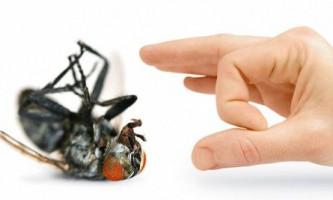 Набридли мухи в будинку? Дізнайтеся, як від них можна позбутися