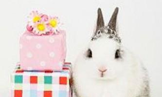 Новорічні подарунки на 2011 рік кролика (кота): що подарувати на новий 2011 рік кролика (кота)