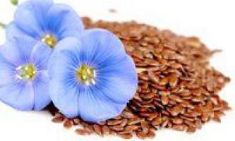 Насіння льону - користь і шкода, як приймати і в яких випадках