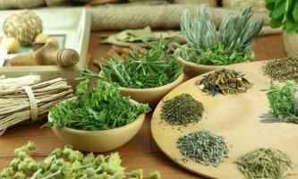 Трава бардакош для схуднення: протипоказання і способи застосування