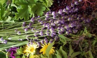 Трави для зміцнення волосся в домашніх умовах